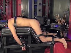Mistress in sexy pants watching fucked right into an asshole sub